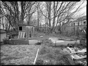 Untitled - The Allotments